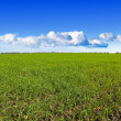Green fields — Stock Photo