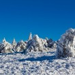 Winter scene — Stock Photo #13563740