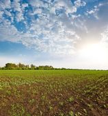 Early morning in a rural fields — Stock Photo