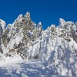 Stock Photo: Frozen snowbound forest