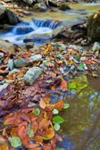 Brook in a autumn mountains — Stock Photo