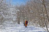 Excursionistas en un bosque de invierno — Foto de Stock