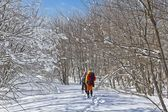 Hikers in a winter forest — Stock Photo