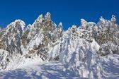 Frozen snowbound forest — Stock Photo