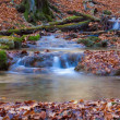 Autumn river — Stock Photo #13785325