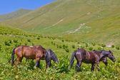 Horses on a mountain pasture — Zdjęcie stockowe