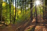 Autumn forest by a sunny day — Stock Photo