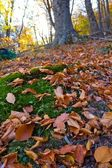 Las hojas de otoño seco closeup — Foto de Stock