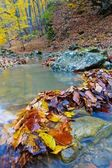 Closeup leaves in a brook — Stock Photo