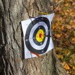 Stock Photo: Arrows hit target