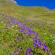 Violet flower road over a green hills - Stockfoto