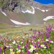 Alpine meadow — Stock Photo #14291119
