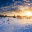 Evening winter plain — Stock Photo