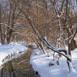 Stock Photo: River in snowbound forest