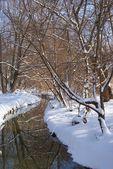 река в заснеженных лесу — Стоковое фото