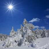 Winter forest by a sparkle day — Stock Photo