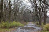Wet autumn forest road — Stock Photo