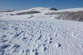Winter plain scene — Stock Photo