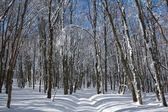 Winter forest by a sunny day — Stock Photo