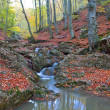 Autumn small brook — Stock Photo #16184501