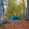 Foto Stock: Touristic tent in autumn forest