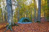 Touristic tent in a autumn forest — Stock Photo
