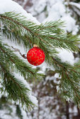 Newyear fir tree branch — Stock Photo