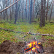 Camp fire in forest — Stock Photo #17689417