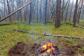 Camp fire in a forest — Stock Photo