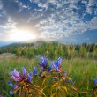 Flowers in a steppe at the early morning — Stock Photo