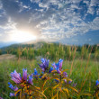 Flowers in a steppe at the early morning - Stock Photo