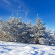 Winter forest — Stock Photo #17872725