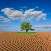 Oasis in a sand desert — Stock Photo