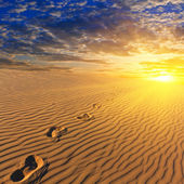 Evening sandy desert — Stock Photo