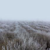 Winter prairie — Stockfoto