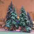 Pine trees in a night town — Stock Photo