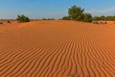 песчаная пустыня — Стоковое фото