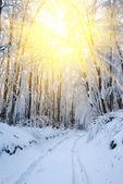 Zimowy las w promienie słońca — Zdjęcie stockowe