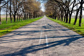 Asphalt road by a spring day — Stock Photo