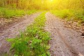 Camino de tierra en un rayos de sol — Foto de Stock