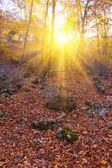 Skogen i en strålar från solen — Stockfoto