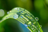 Closeup green plant in a water drops — Stock Photo
