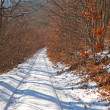 Road in a winter forest — Stock Photo
