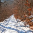 Road in a winter forest — Stock Photo #19409197