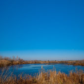 Small lake under a blue sky — Stock Photo
