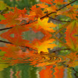 Red maple branch reflecter in a water - Stock Photo