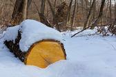 Tronco d'albero in una neve — Foto Stock