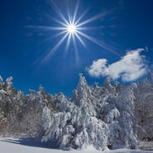 Cold winter sunny day — Stockfoto