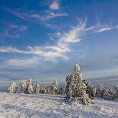 Pinhal em um banco de neve — Fotografia Stock