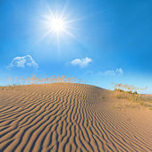 Summer hot desert scene — Stock Photo
